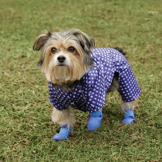 Pet Booties, Medium