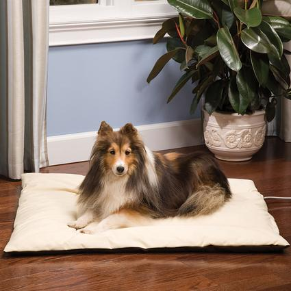 Heated Wellness Cushion - Big Dog