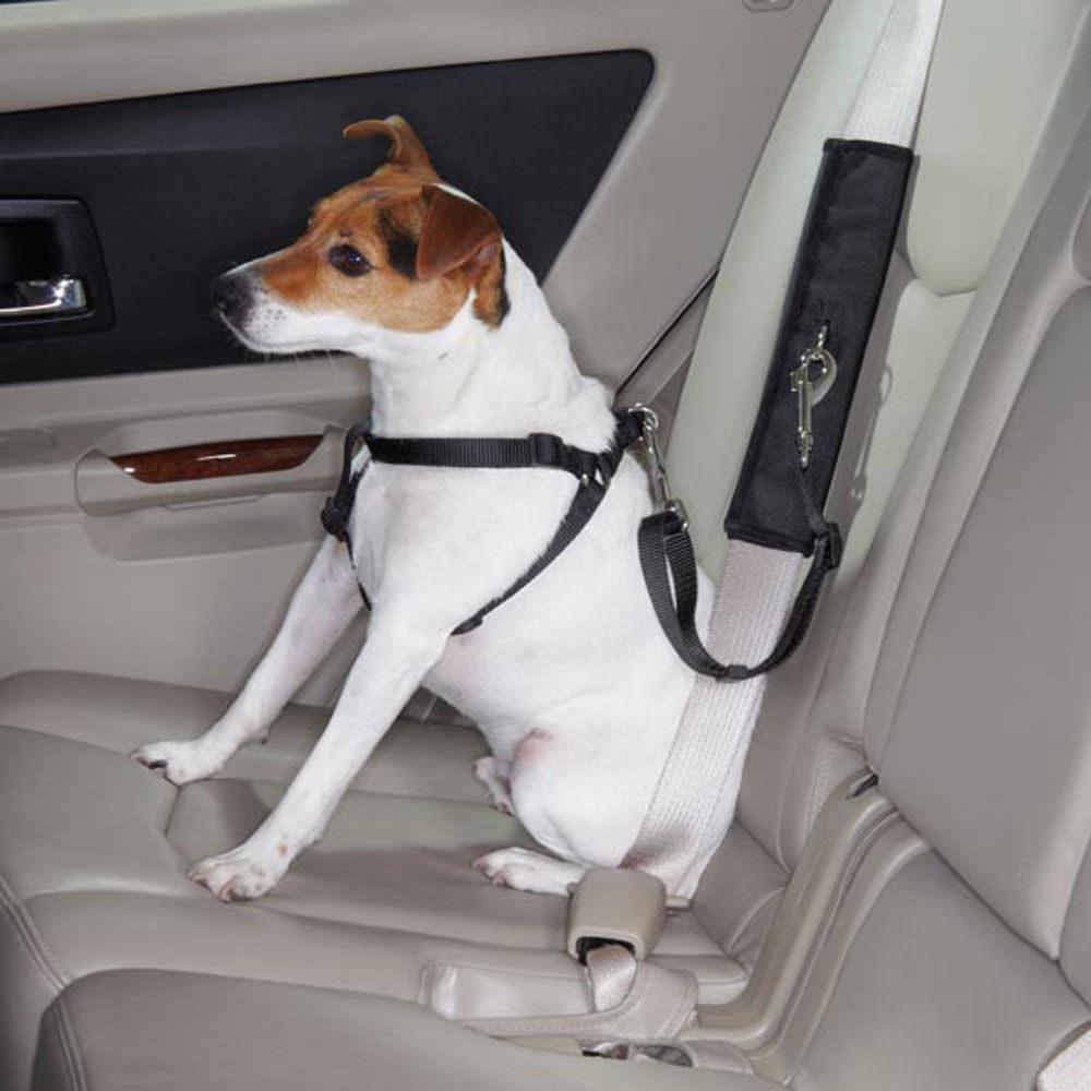 Dog Carrier Car Seat Belt