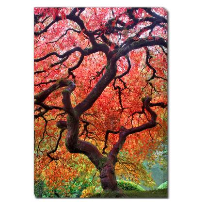 Art - Japanese Maple Tree