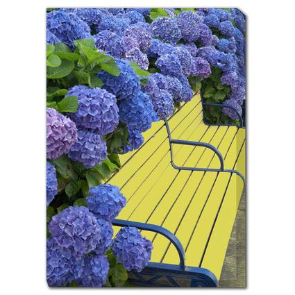 Art - Bench and Hydrangea