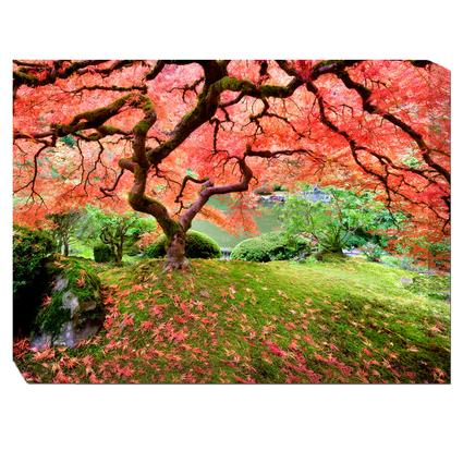 Art- Japanese Maple Tree