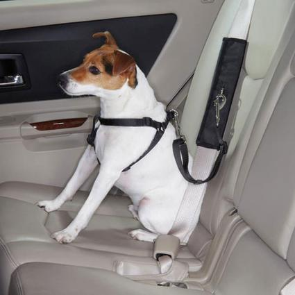 Pet Seat Belt Connector