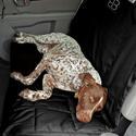 Dog Car Seat Protector, Rear, Black-XL