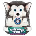 Hideaway Pets, Siberian Husky