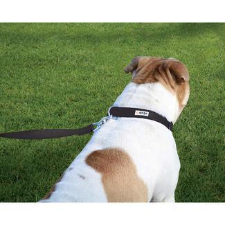 Pet Stuff Pet Collar, Large, Black