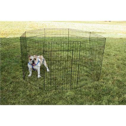 Pet Fence, 36