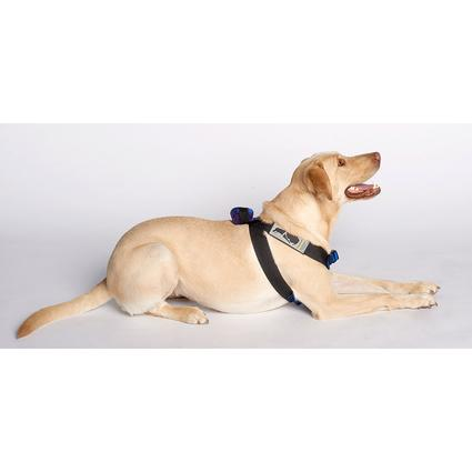 Blue Canine Travel Safe Harness, X-Large
