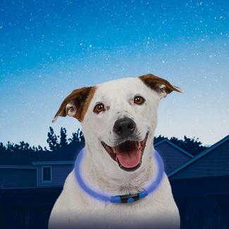 NiteHowl LED Dog Necklace, Blue